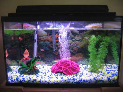 A simple pic of a beginner fish aquarium. THIS is the proper set up!
